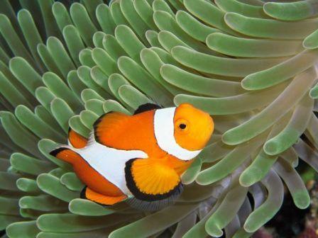 Lạ mắt với những sinh vật sặc sỡ dưới đáy đại dương