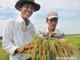 Đẩy mạnh sản xuất nông nghiệp theo hướng công nghệ cao, thích ứng với biến đổi khí hậu