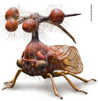 Kỳ thú côn trùng