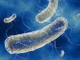 Sản xuất nhiên liệu từ vi khuẩn gây bệnh dạ dày