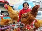 """""""Cúm gia cầm H7N9 có thể lây từ người sang người"""""""